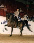 Dutch Dolley Marla Buckeye 96 Victory
